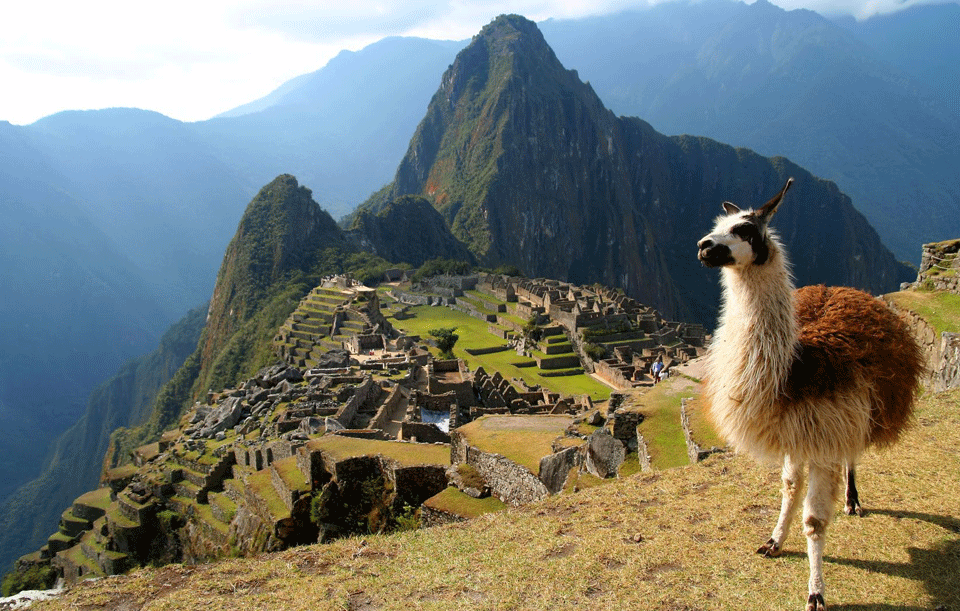 Trek_Package 1747 -